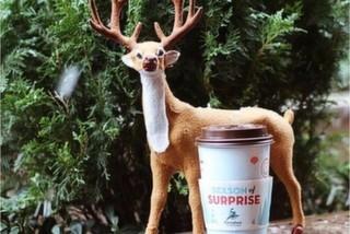 Caribou Coffee, Moda