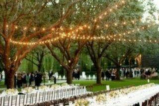 Hayal Ormanı Acarkent