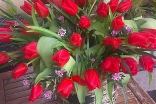 Kırmızı Garden